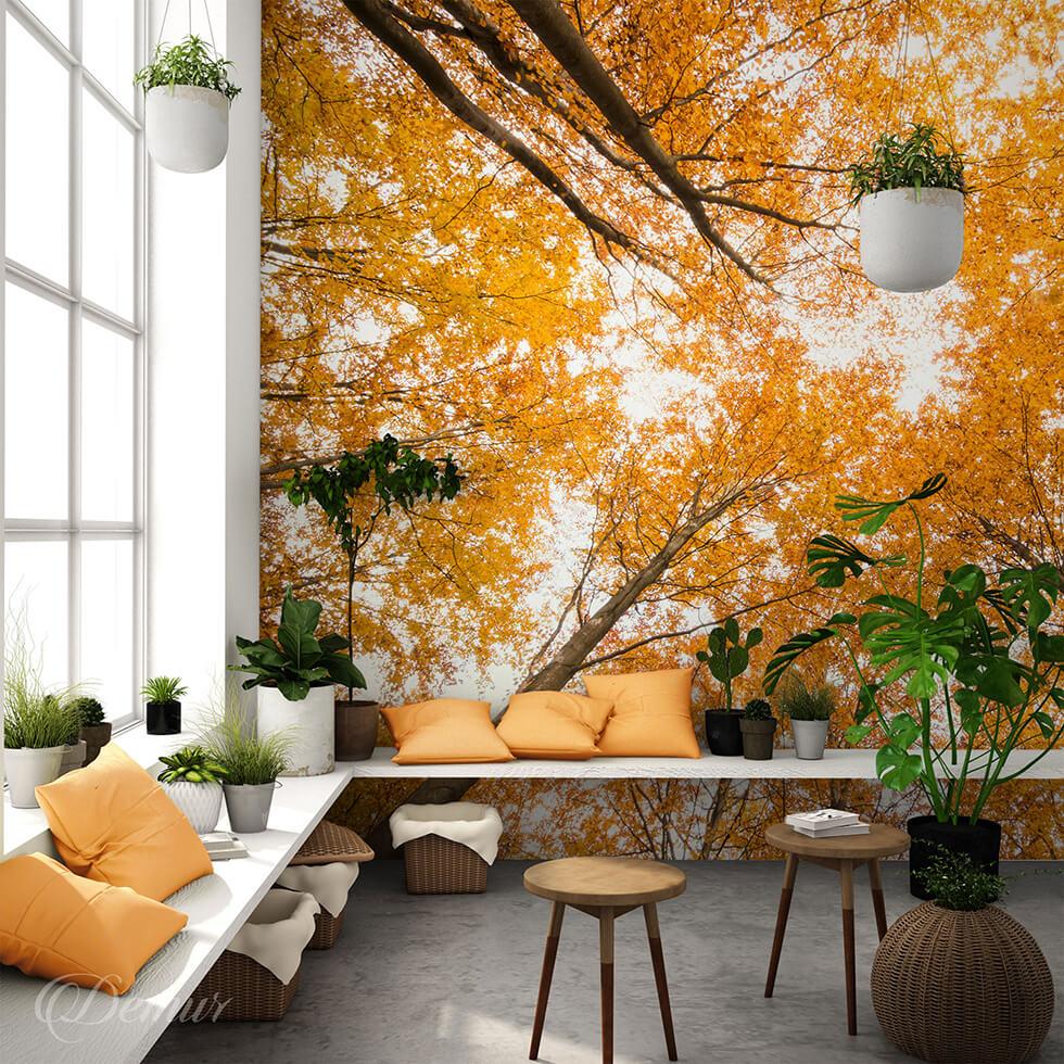 Fototapeta Złote korony drzew - Fototapeta jesienna - Demur