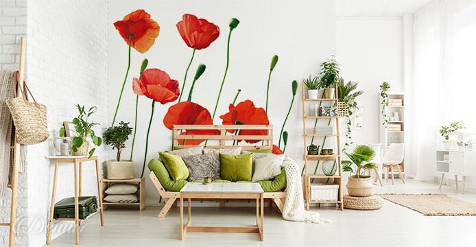 Fototapeta Czerwone maki - Fototapety z kwiatami - Demur