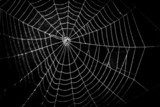 pretty scary frightening spider web for halloween  Zwierzęta Fototapeta