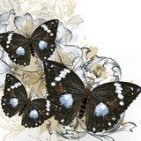 Fashion vector background with butterflies  Motyle Fototapeta