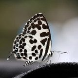 beautiful butterfly  Motyle Fototapeta