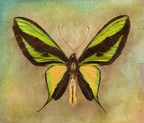 Vintage background with butterfly  Motyle Fototapeta