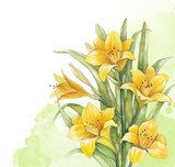 Watercolor lily flower. Perfect for invitation of greeting card  Rysunki kwiatów Fototapeta