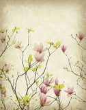 magnolia flower with Old antique vintage paper background  Draw Flower Fototapeta