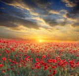 sunset over poppy field  Krajobraz Fototapeta