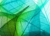 Macro leaves background texture  Tekstury Fototapeta