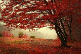 Beautiful forest during a foggy autumn day  Las Fototapeta