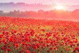 red poppy field in morning mist  Fototapety Maki Fototapeta