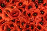red spring poppies texture background  Fototapety Maki Fototapeta