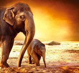 Elephant Mother and Baby outdoors  Orientalne Fototapeta