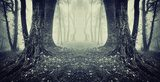 symmetrical photo of a secret passage in a mysterious forest fog  Las Fototapeta