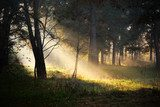 sunbeams in fog in the forest  Las Fototapeta