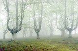 forest with fog and beautiful light  Las Fototapeta