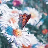 Butterfly on the flower  Motyle Fototapeta