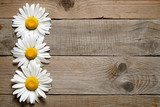 Daisy flowers on wooden background  Salon Plakat