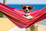 dog on hammock  Salon Plakat