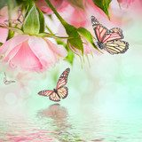 Beautiful roses and butterfly, flower, floral background  Sypialnia Plakat