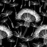 Seamless background with overblown dandelion  Dmuchawce Fototapeta