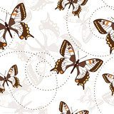 Seamless pattern with butterflies  Motyle Fototapeta