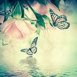 Beautiful roses and butterfly, flower, floral background  Motyle Fototapeta