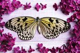 Beautiful lilac flowers and butterfly on wooden background  Motyle Fototapeta