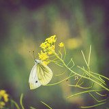 Butterfly on wildflowers  Motyle Fototapeta