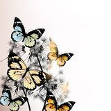 Cute stylish floral background with butterfly  Motyle Fototapeta