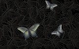 Desktop wallpaper - background with butterflies  Motyle Fototapeta