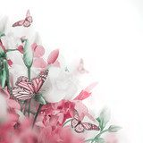Bouquet of white and pink roses, butterfly. Floral background.  Motyle Fototapeta