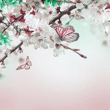 Apricot flowers in spring, floral background  Motyle Fototapeta