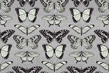 Butterfly pattern background  Motyle Fototapeta