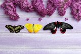 Beautiful butterflies and lilac flowers, on wooden background  Motyle Fototapeta
