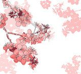 Retro floral background with a flower sakura  Draw Flower Fototapeta