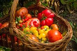 different types of tomatoes  Kuchnia Plakat