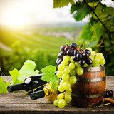 Bottles of red and white wine with fresh grape  Plakaty do kuchni Plakat