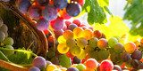 grapes rainbow  Plakaty do kuchni Plakat