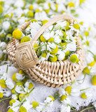 chamomile flowers in basket on wooden surface  Salon Plakat