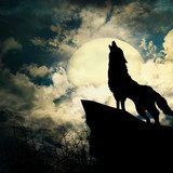wolf in silhouette howling to the full moon  Plakaty do Salonu Plakat