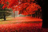 red autumn in the park  Plakaty do Sypialni Plakat