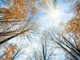 Autumn sky with sunshine and tree tops  Na sufit Naklejka