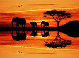 Elephant silhouette at sunset  Afryka Fototapeta