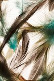 Color feathers  Obrazy do Sypialni Obraz