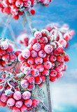 Frozen rowan berries  Obrazy do Sypialni Obraz