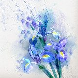 Watercolor iris  Obrazy do Sypialni Obraz