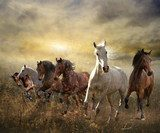 herd of horses galloping free at sunset  Obrazy do Sypialni Obraz