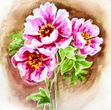 Painted watercolor card with peony flowers  Olejne Obraz