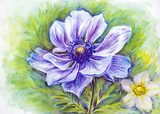 Japanese Anemones flower. Watercolor.  Olejne Obraz