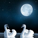 Swans on the lake in the night sky.  Zwierzęta Obraz