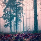 Misty red color woods  Krajobraz Fototapeta