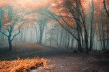 trees with red leafs in a forest with fog  Krajobraz Fototapeta